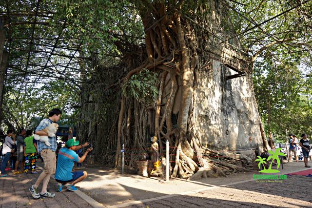 Wat Bang Kung – The Temple That Is Covered By The Roots Of The Tree
